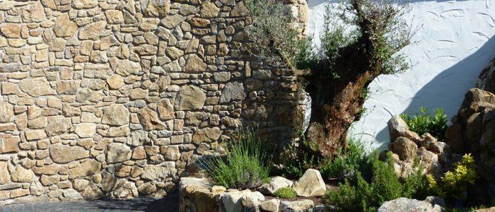 LA-CAVA-Bruchsteinmauer-mit-Olivenbaum