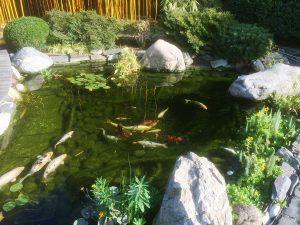 LA-CAVA-Gartenteich 816