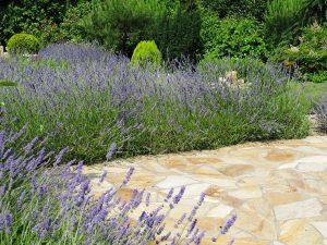 LA-CAVA-Lavendelgarten
