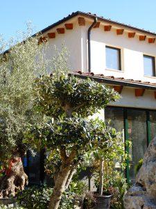 LA-CAVA-Olivenbaum-mit-Formschnitt