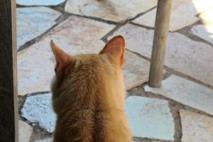 LA-CAVA-Katzenblick
