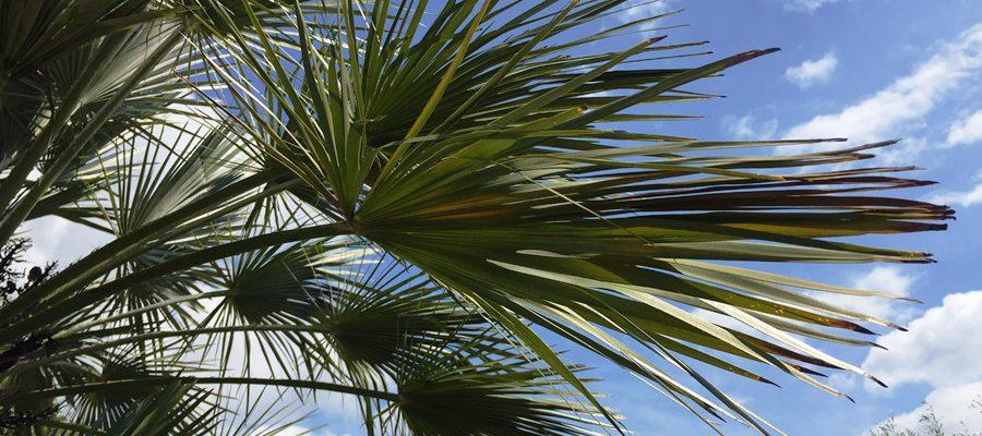 la-cava-palmen-frostfest