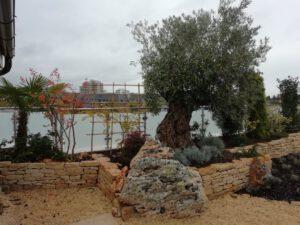 la-Cava-neu-angelegte-dachterrasse-mit-olivenbaum